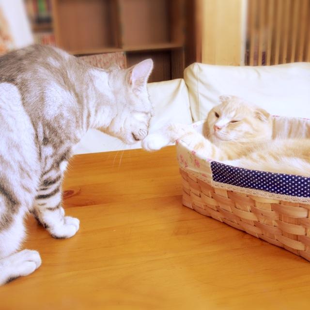 ほんと、ホワ~ンとした猫ちゃんたちばかりでした。