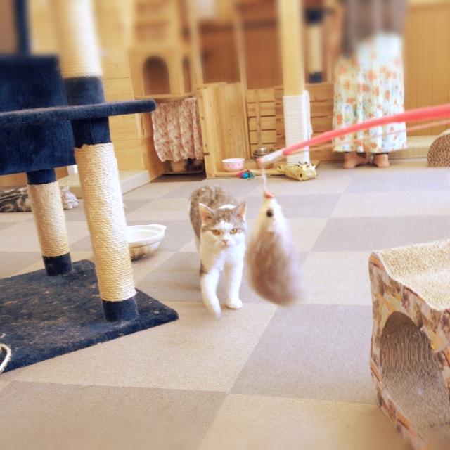 犬派のサイトウが、猫カフェで猫の下僕となる。