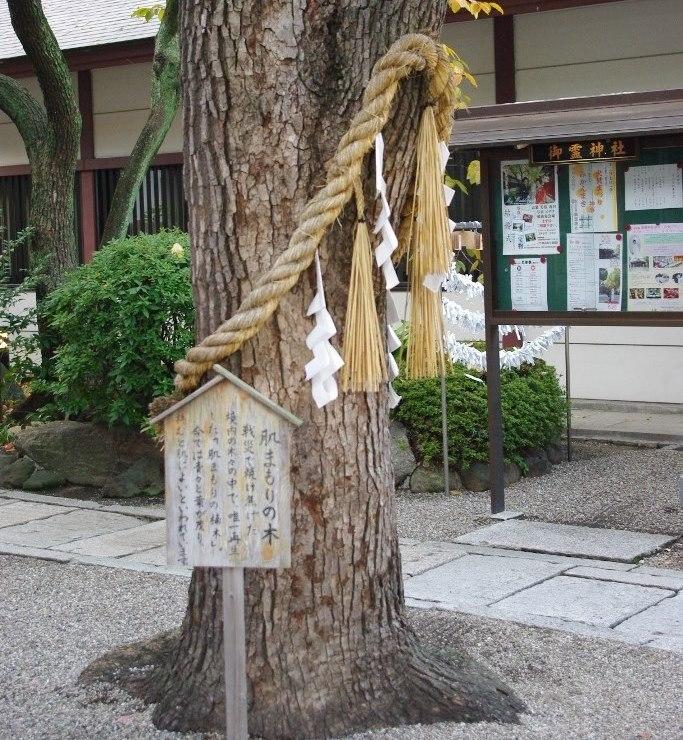 肌まもりの木