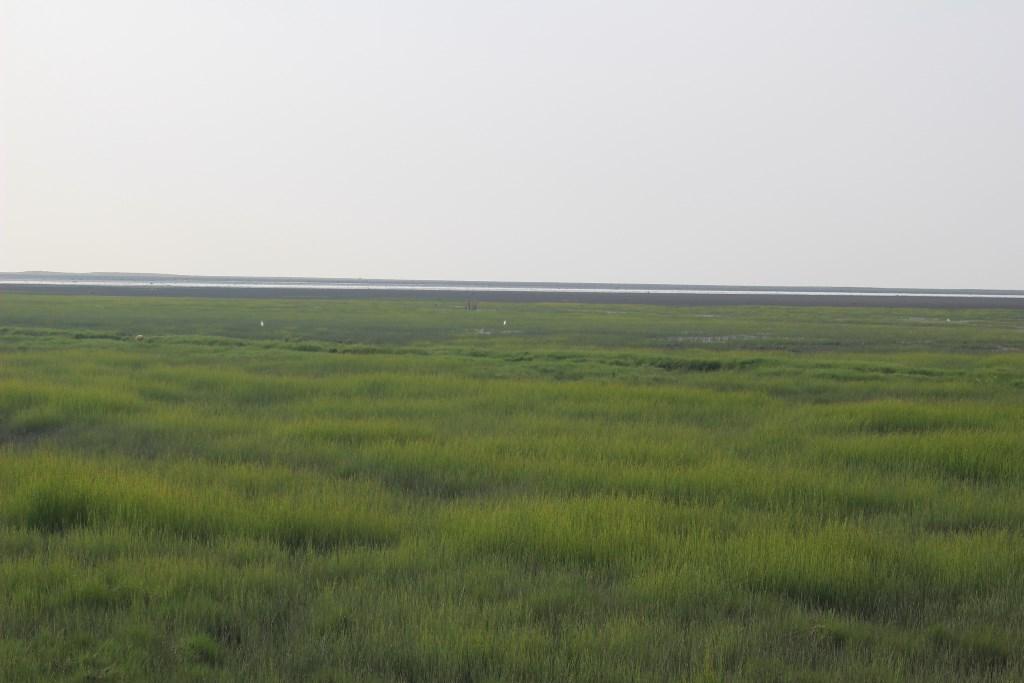 高美湿地2