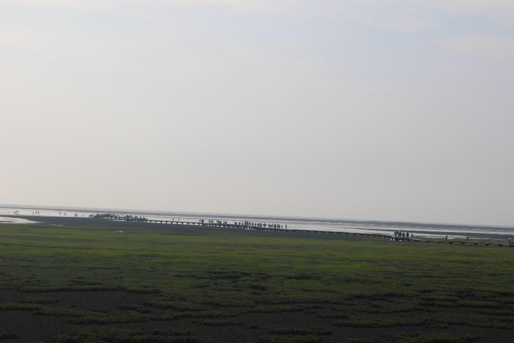 高美湿地3