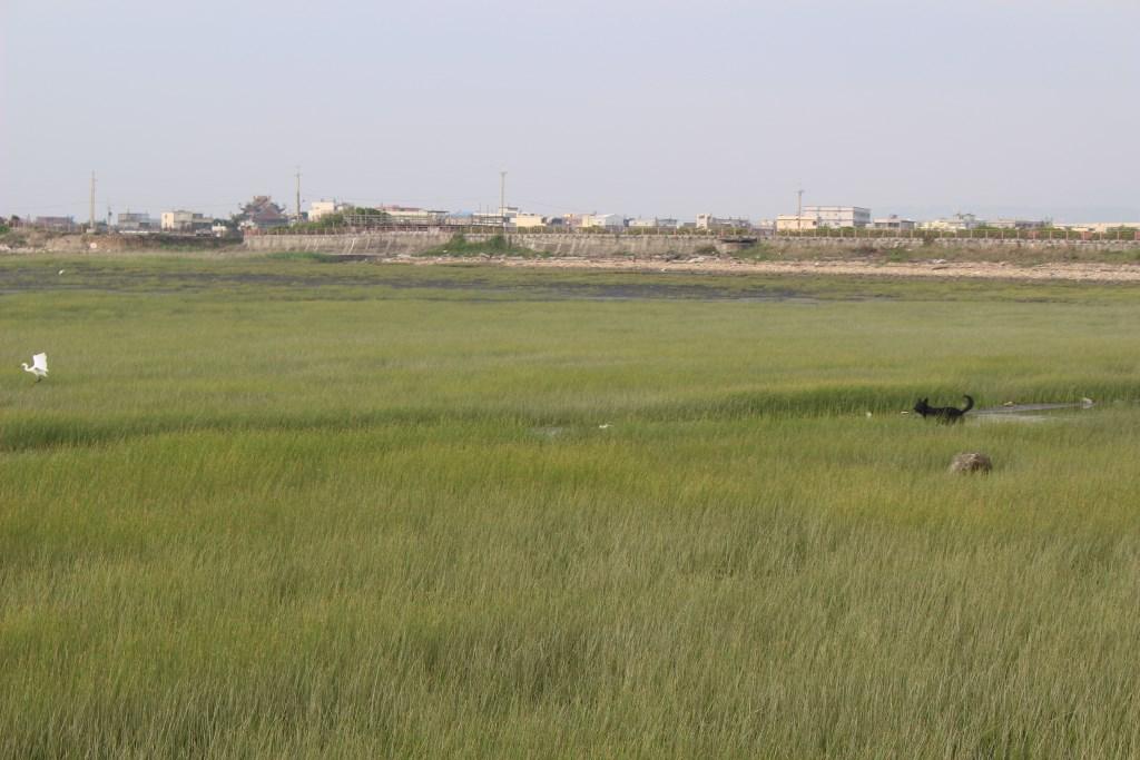 高美湿地 鳥と犬2