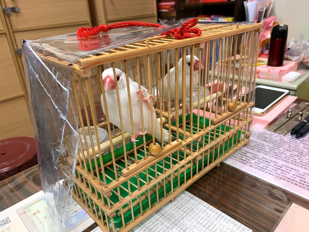 【2019年1月台湾1人旅⑳】台北・龍山寺の地下街で文鳥占い。真っ白モフモフ大吉さん&大福さんが一生懸命占ってくれます。