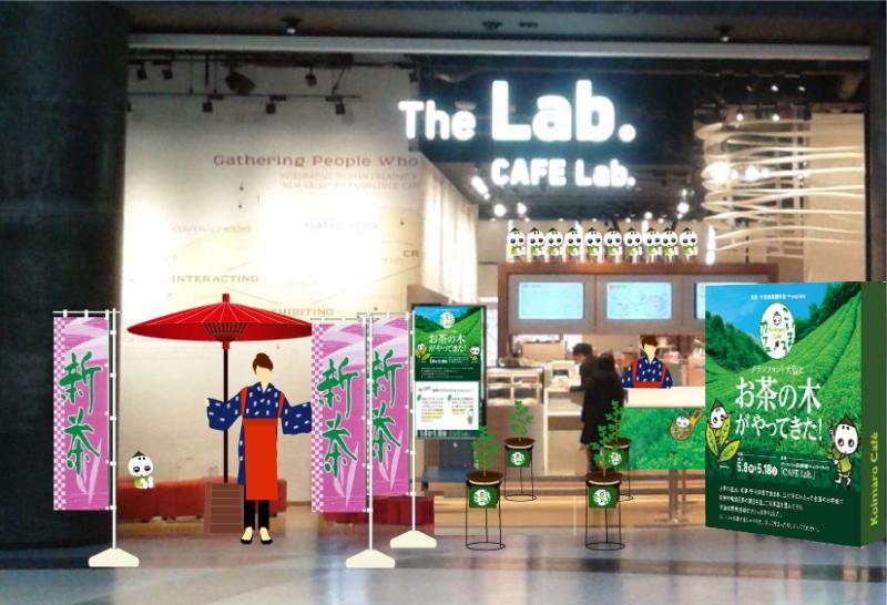 お茶の木1,000本が『グランフロント大阪』に出現!! 緑茶カフェ『こいまろcafe』期間限定オー…