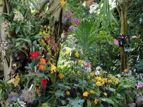 熱帯雨林室