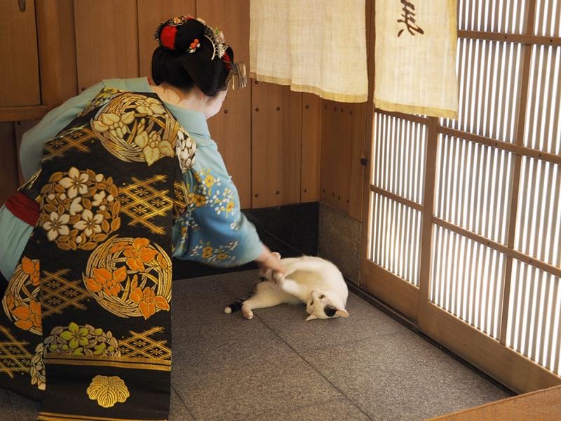 ねこを通して京都を見る。岩合光昭写真展「ねこの京都」