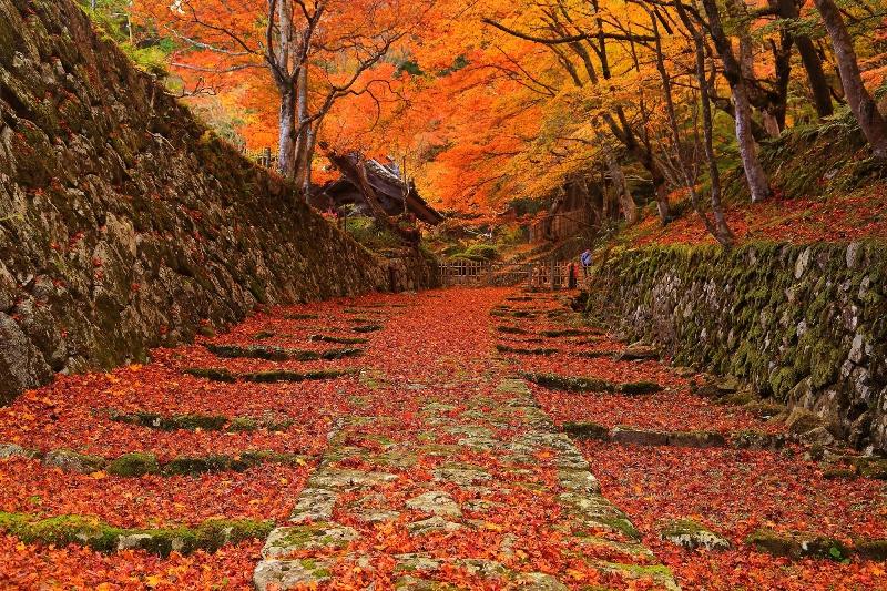 百済寺 写真提供:(公社)びわこビジターズビューロー