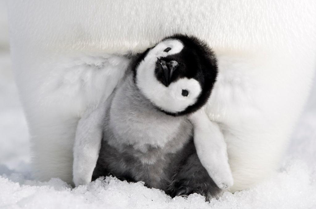 映画『皇帝ペンギン ただいま』