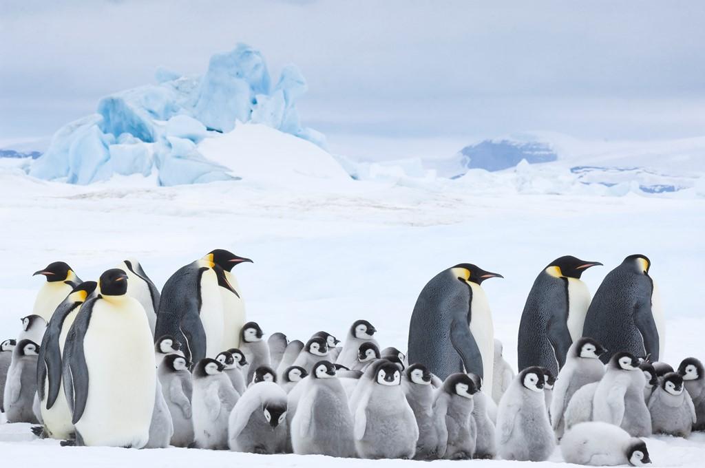 映画「皇帝ペンギン ただいま」サブ画像1