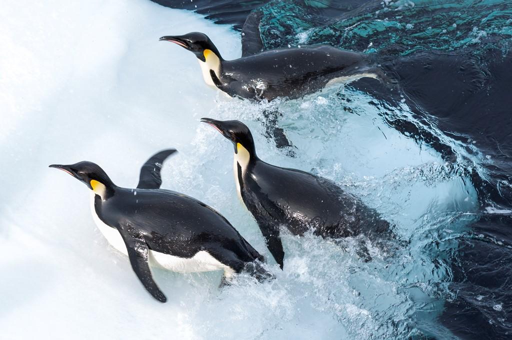 映画「皇帝ペンギン ただいま」サブ画像2