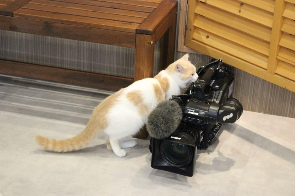 ねこカメラに興味津々