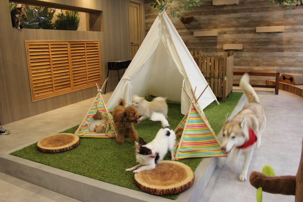 アメリカ村のど真ん中に、動物たちが暮らす森のカフェ『Animeal(アニミル)』誕生!
