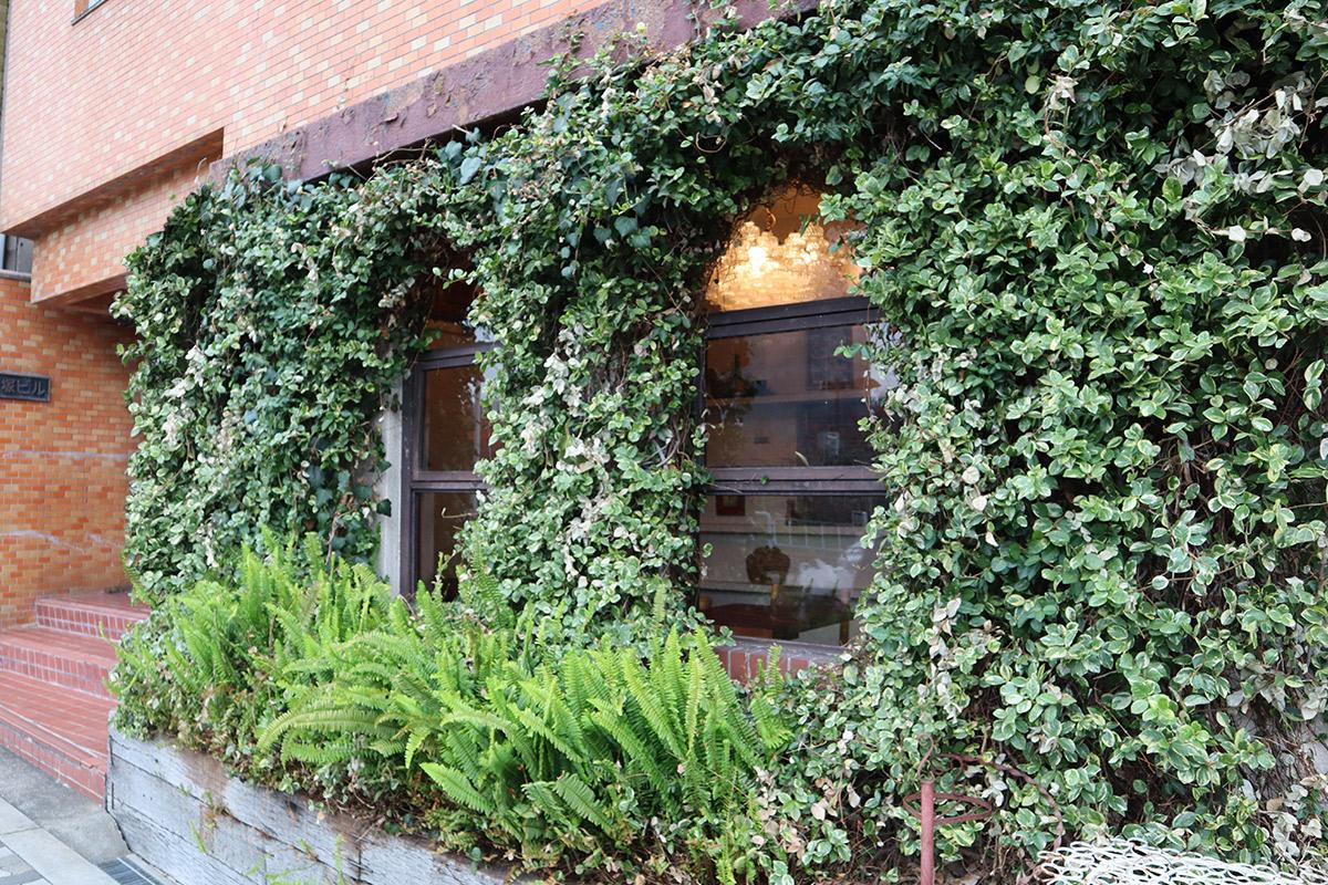 窓を囲む植物