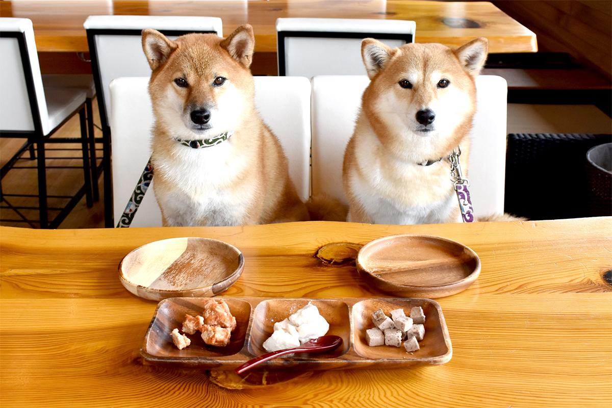 レンジで簡単!ワンちゃん向けの手作りおやつで、愛犬とおうち時間を楽しもう