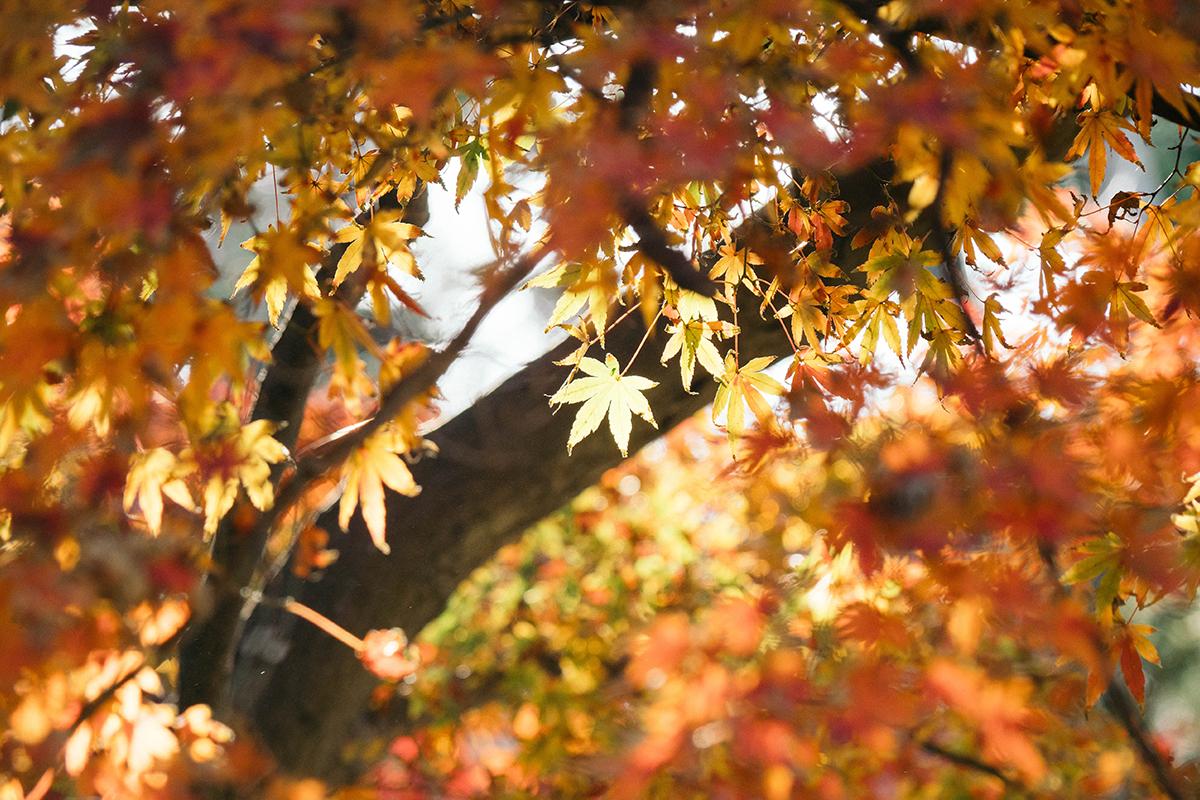 引っ越しの時期は秋がオススメ