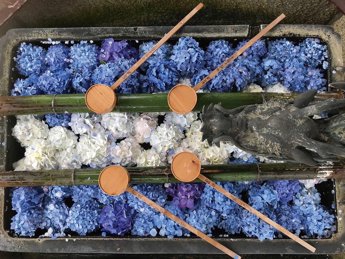 【長岡京】あじさい約5,000株が咲き誇る!『柳谷観音』にて「あじさいウイーク」開催