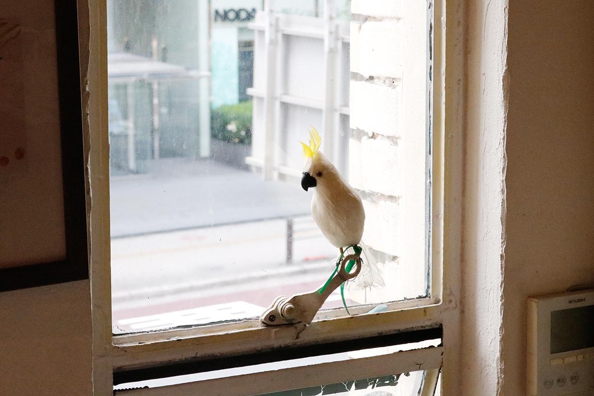 イルベッカフィーコ 鳥さん