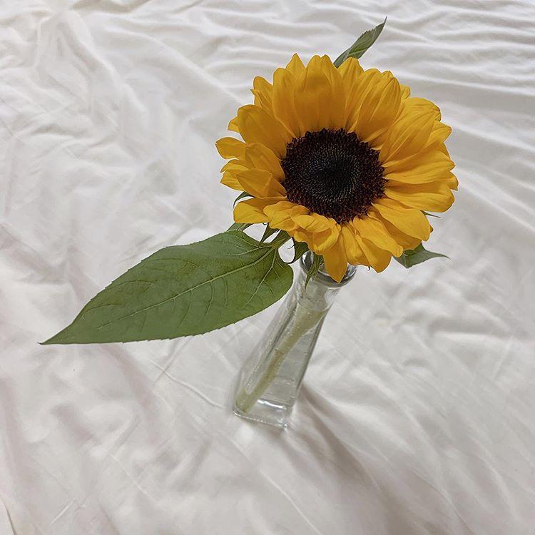 夏のインテリア小物 花