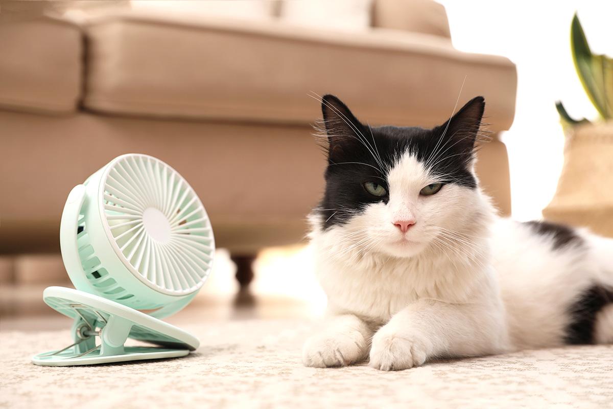猫も熱中症になるの?暑い夏を快適に過ごす対策と留守番に必要な3つのポイント