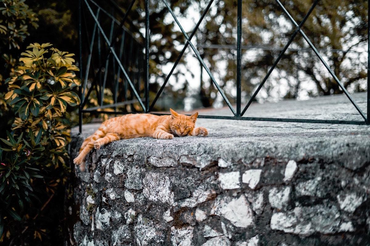 冷たい石の上で寝る猫
