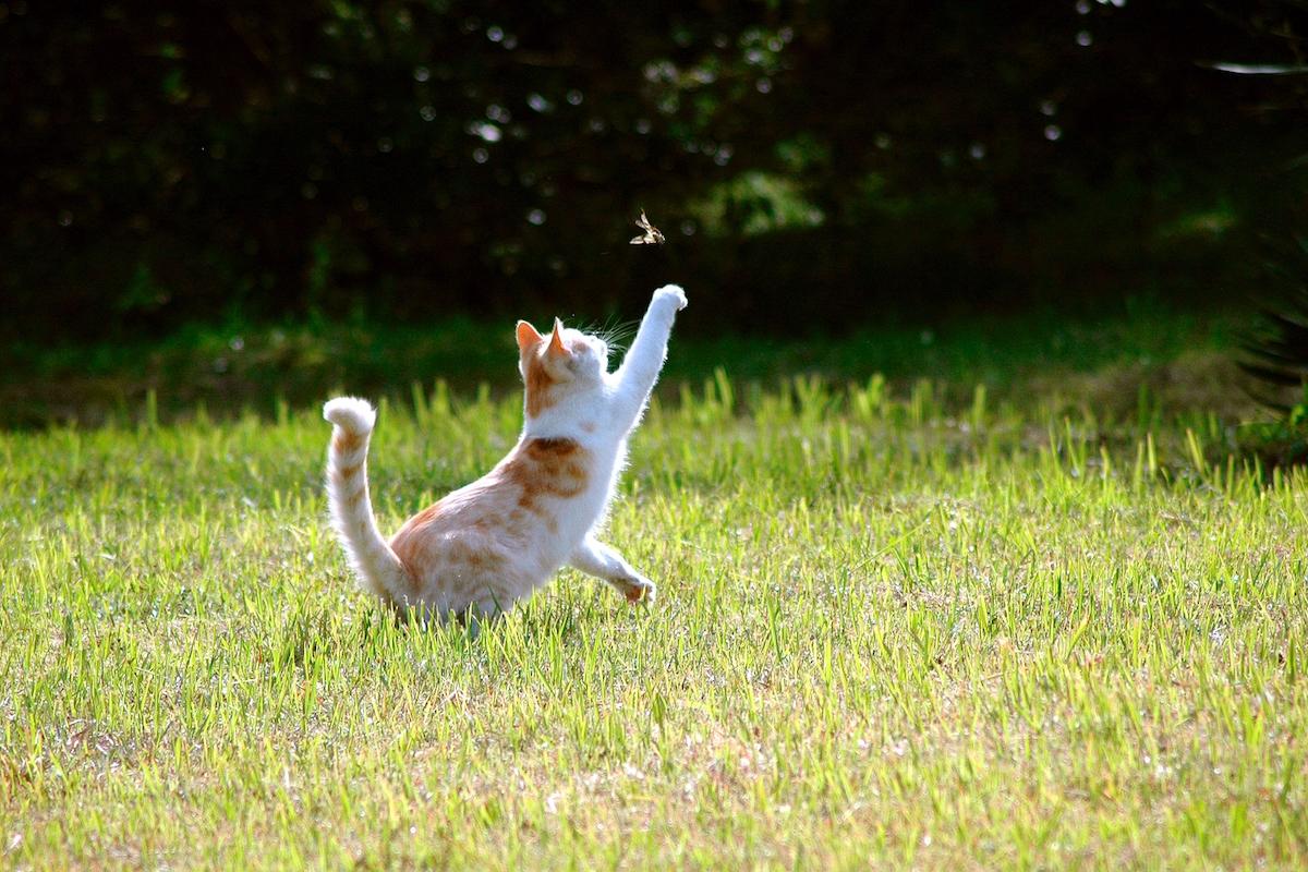 虫を追いかける猫