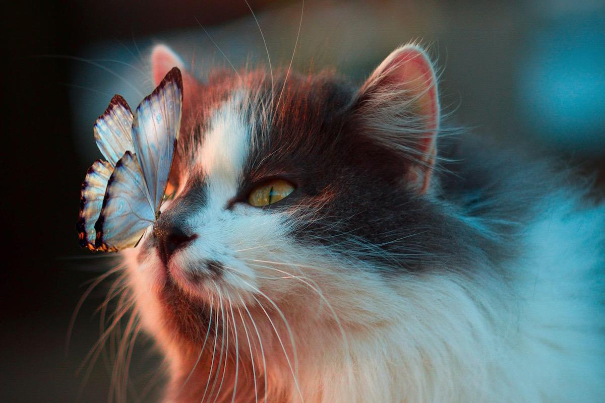 鼻に蝶がとまっている様子