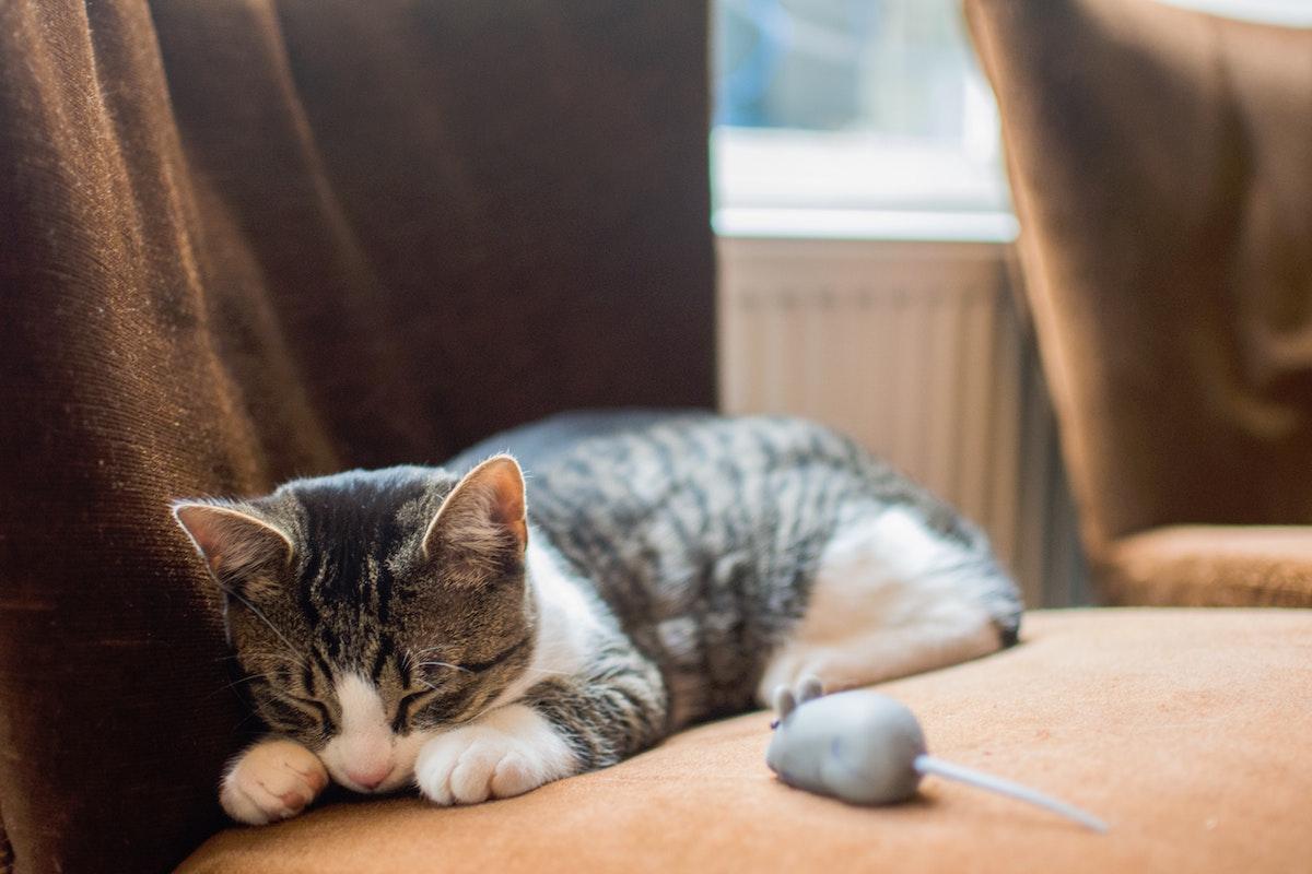 遊び疲れて眠る猫
