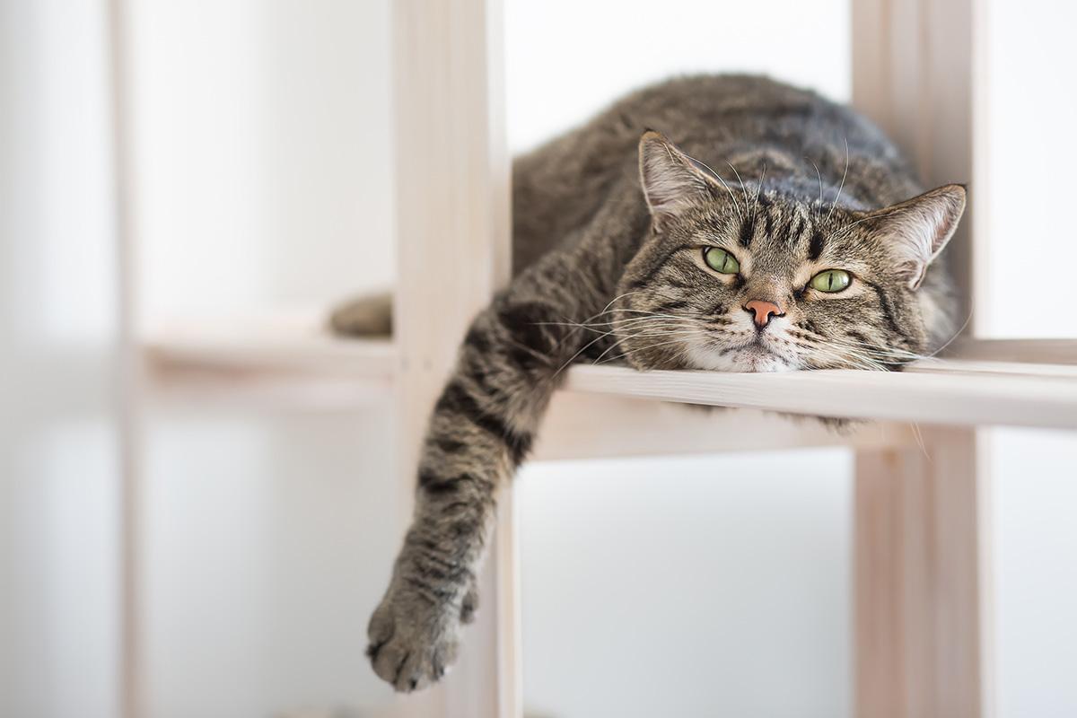 """2月22日だけが猫の日じゃない!8月8日は""""世界猫の日""""!"""