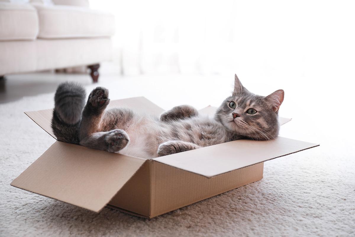 猫が喜ぶ、猫ともっと仲良くなれる!プレゼントにもオススメの猫グッズ♪