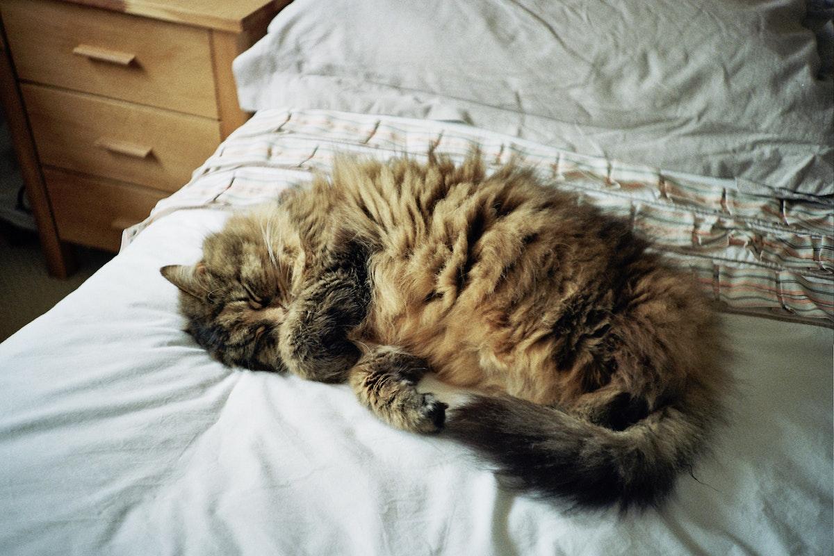 寝たふりした猫