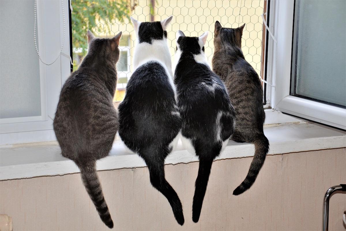 しっぽの動きで猫の感情がわかる!しっぽと気持ちの関係