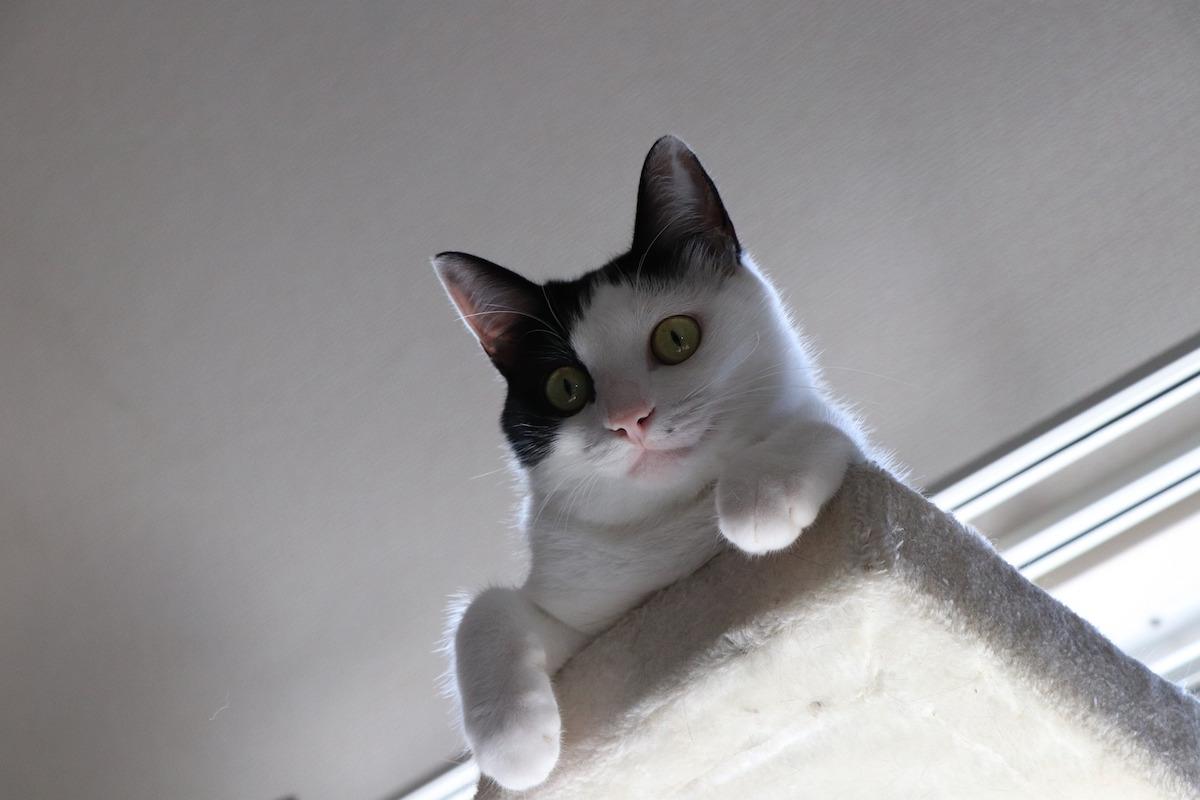 キャットウォークから下を見る猫