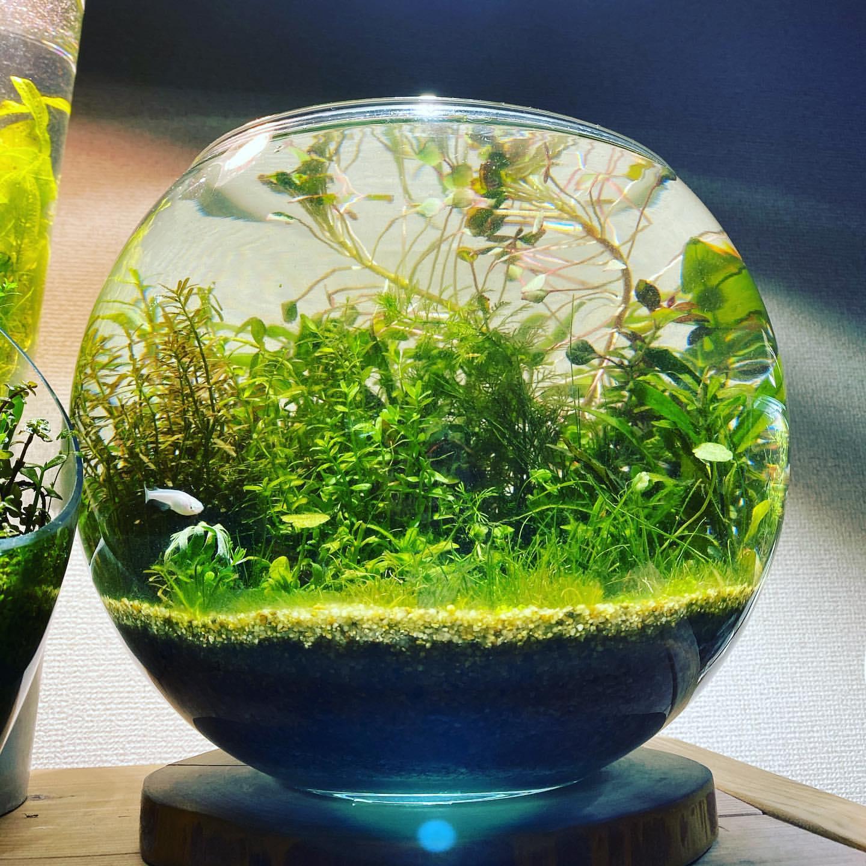 グリーン+水槽