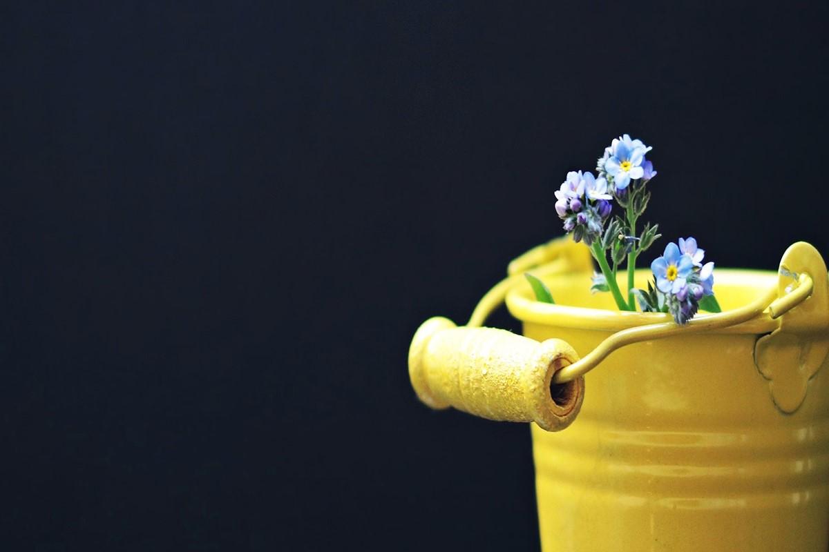 黄色いバケツとお花