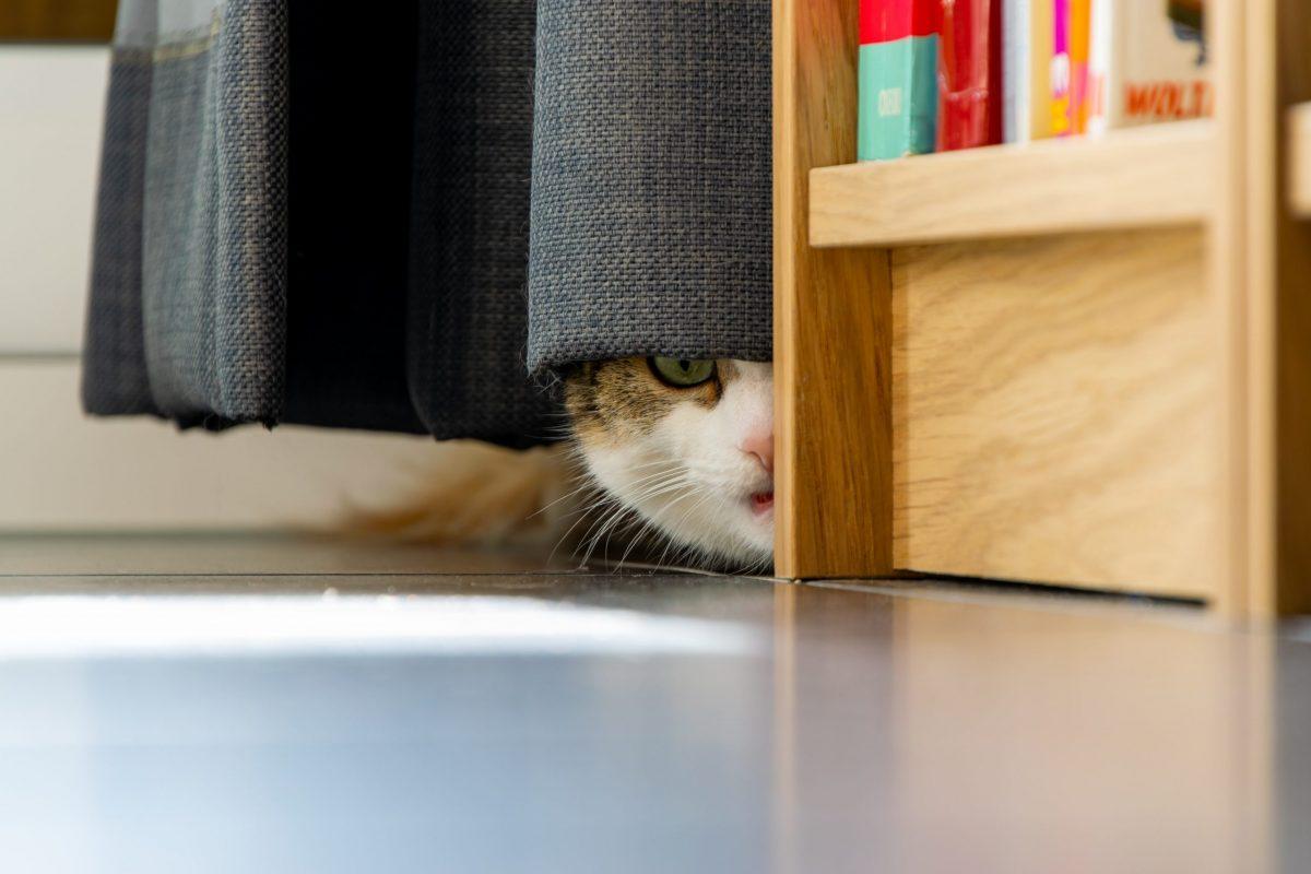 9月1日は「防災の日」!もしもの時に愛猫をどうする?