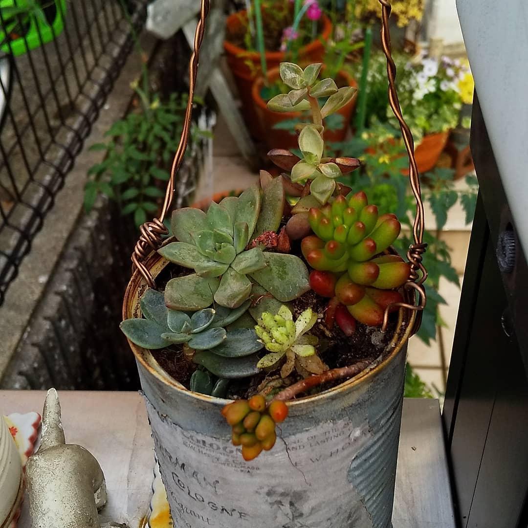 植木鉢 空き缶リメイク