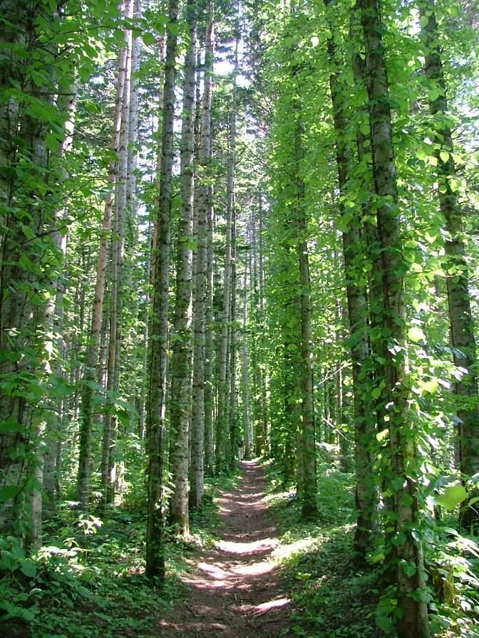 中頓別町の森