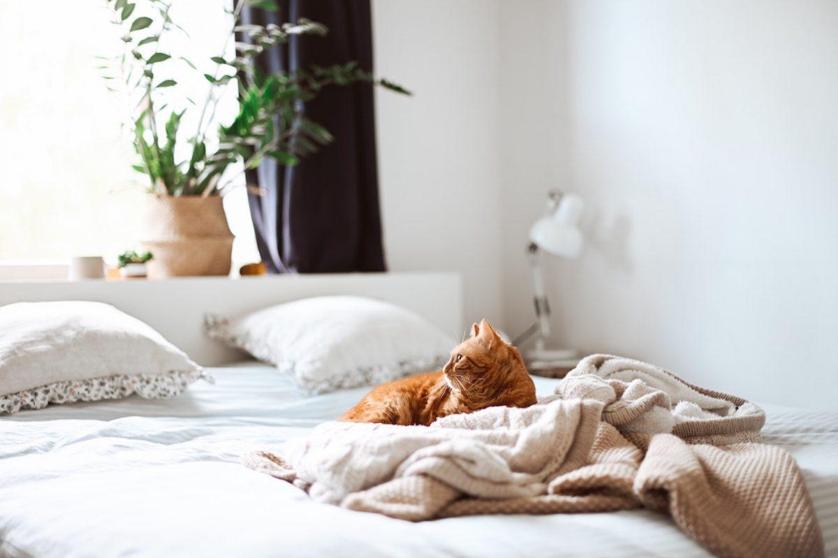 愛猫と快適に暮らすために、気をつけたい4つのこと
