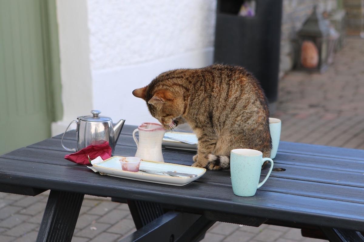 物を落とそうとする猫