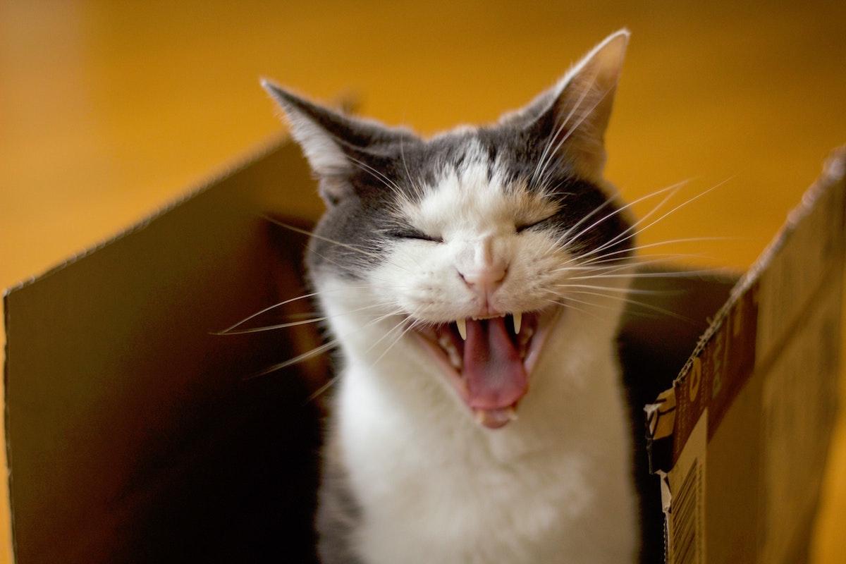 """猫を飼ったことのある人にはわかる!""""猫あるある""""10選"""