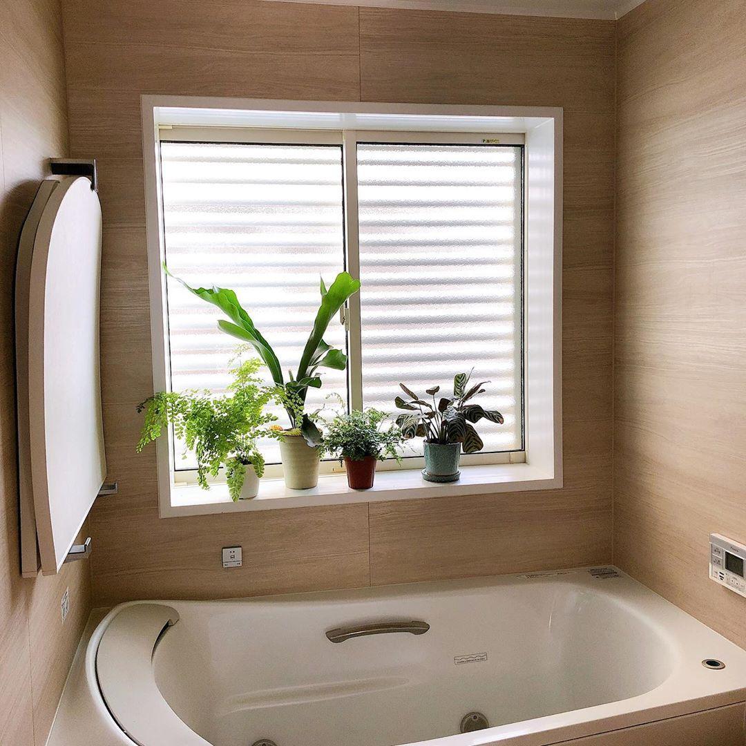 バスルームに植物を置いたインテリア