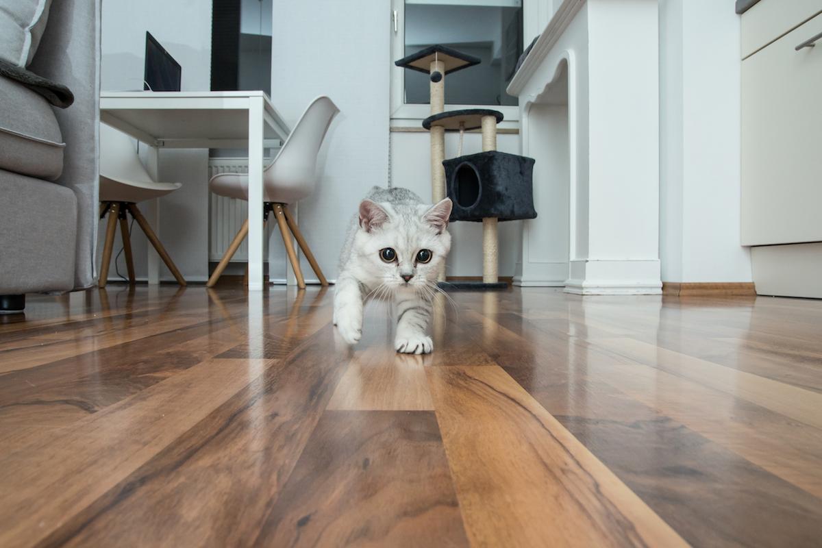 走り回る猫