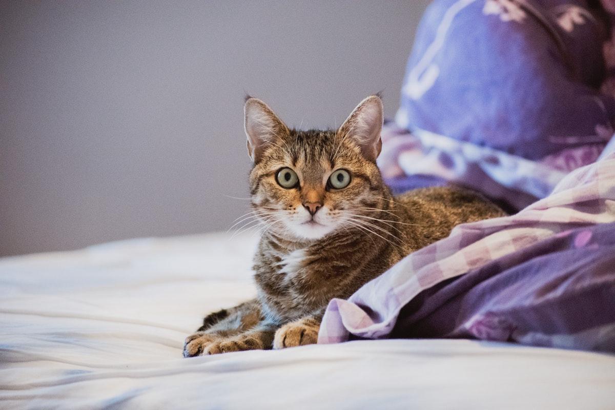 どうしてこんなことをするの?猫の問題行動と解決策