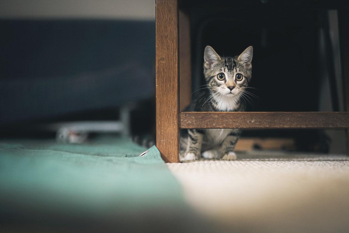 物陰に隠れる猫