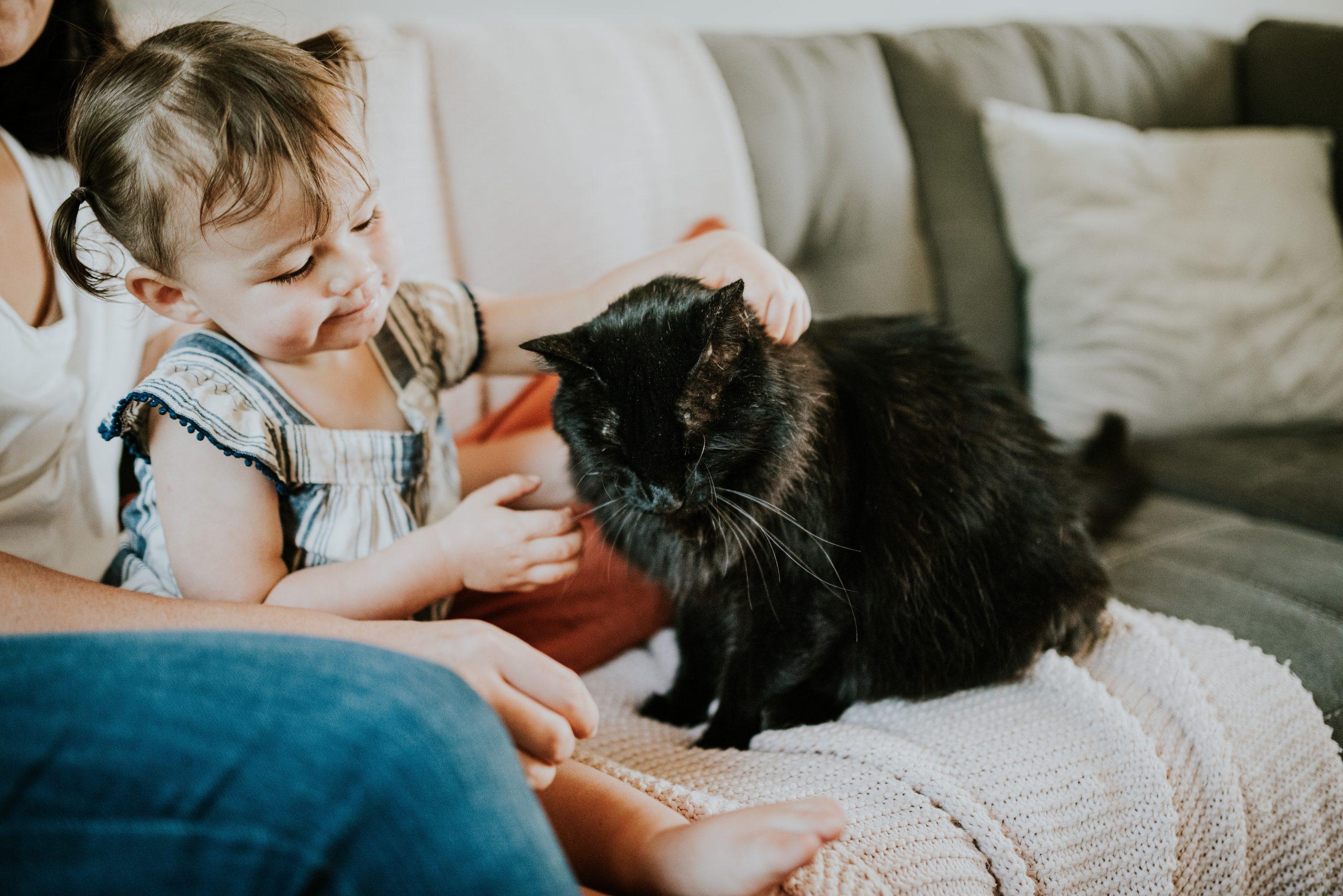 新しい家族の一員となる猫を迎えるために準備したい6つのこと