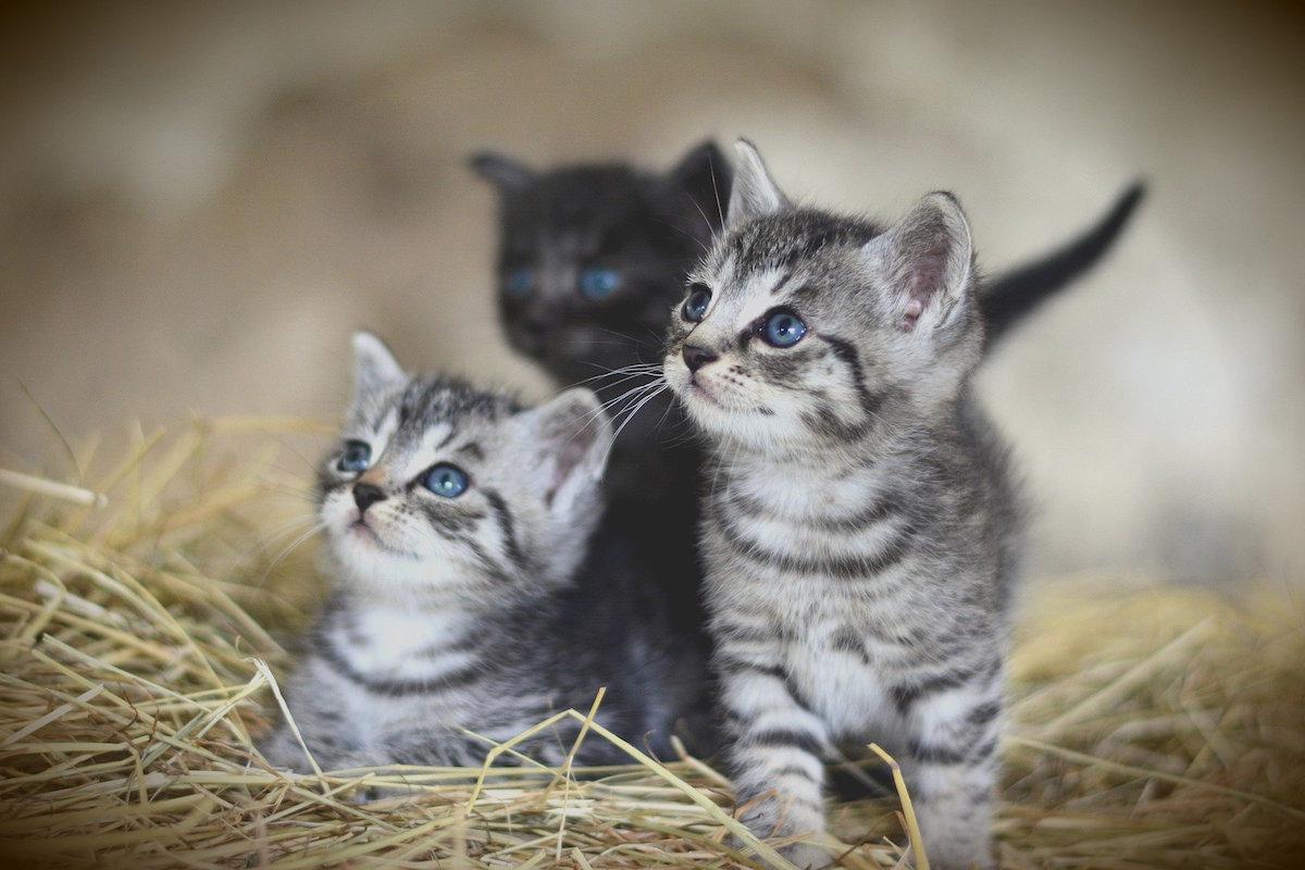 子猫1〜2か月