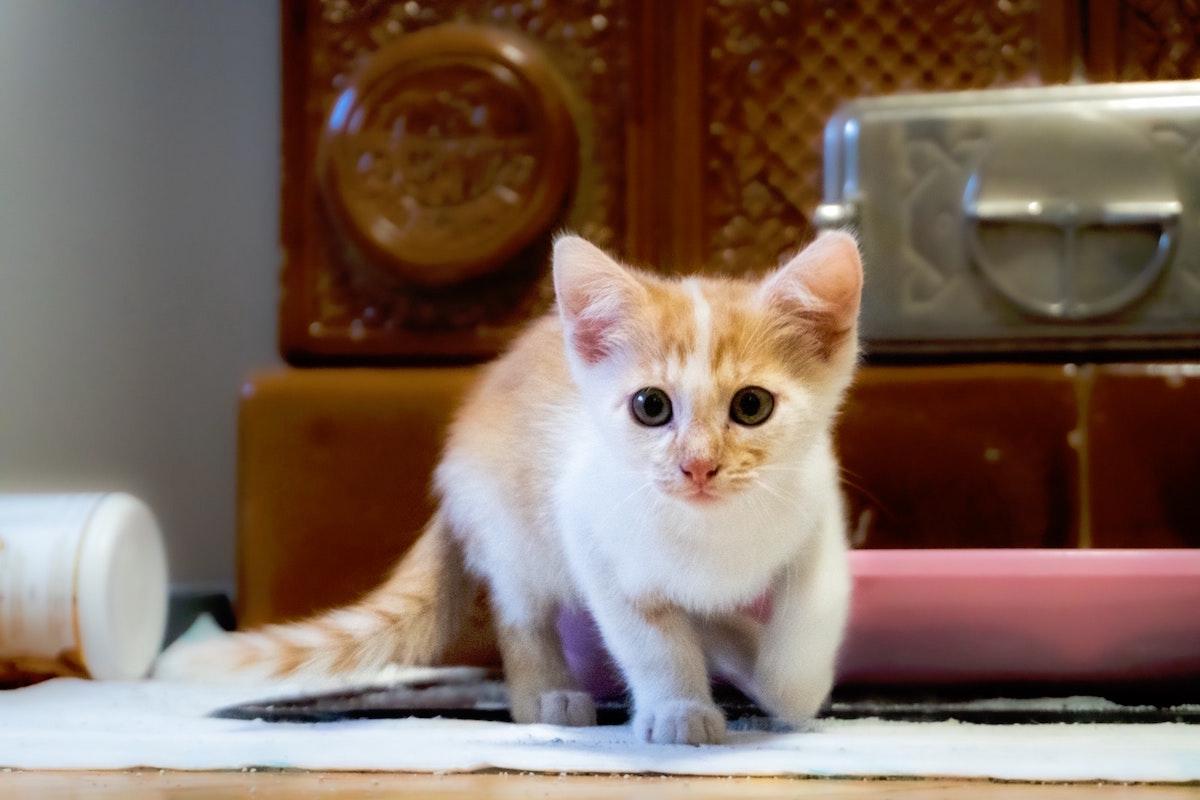 子猫2〜3か月