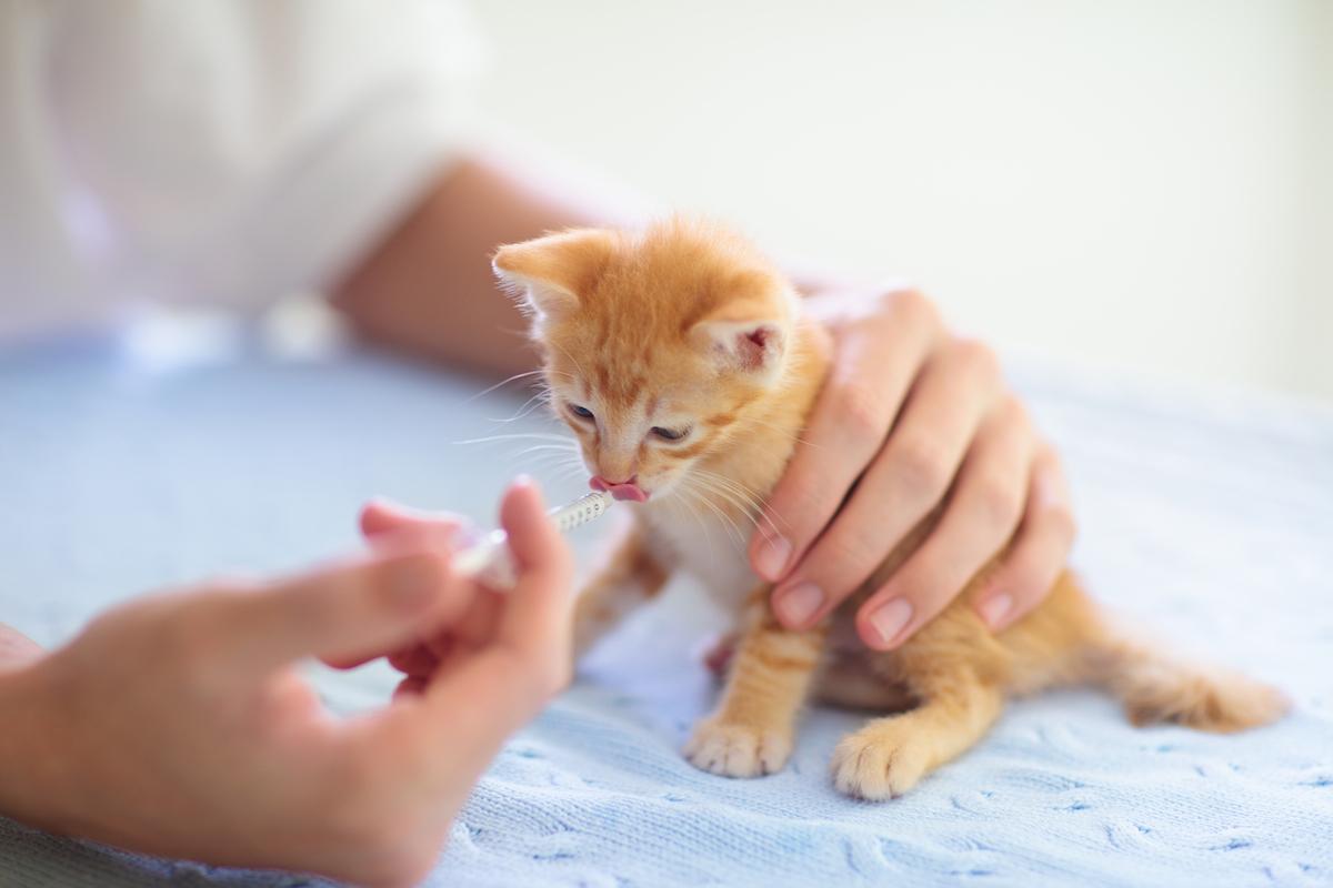 動物病院で検査