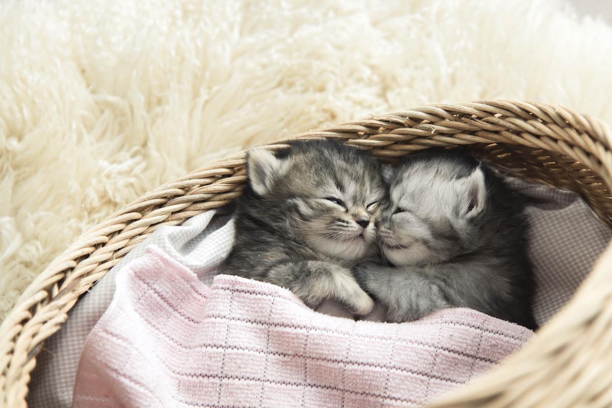 ひっついて寝る子猫