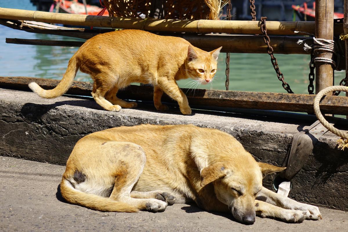 犬と猫のベストショット
